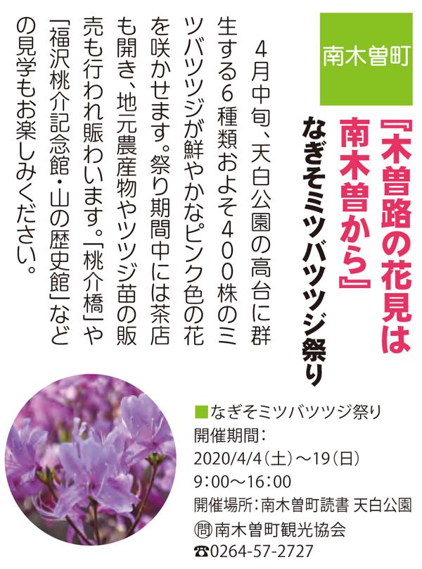 2020/4/4(土)~19(日)なぎそミツバツツジ祭り  南木曽町天白公園